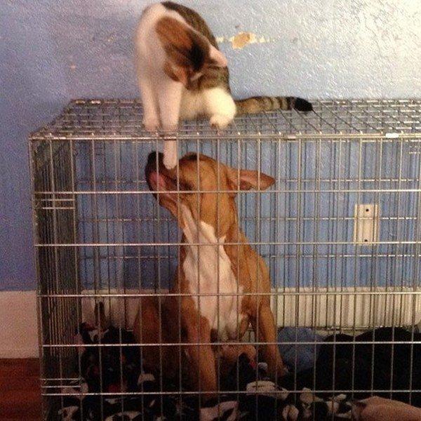 cat annoying dog crate