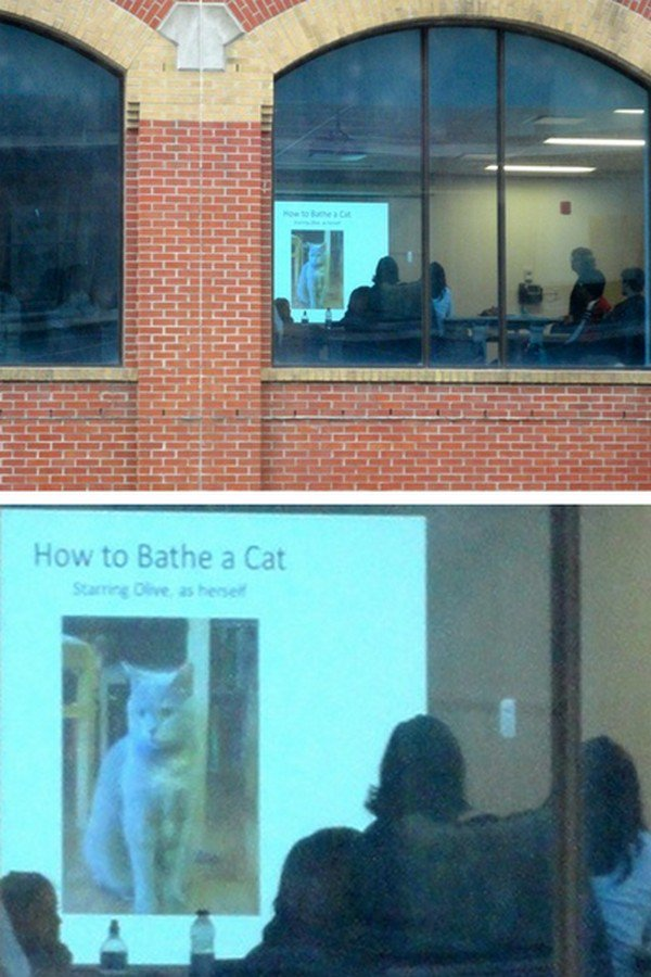 cat bathe meeting