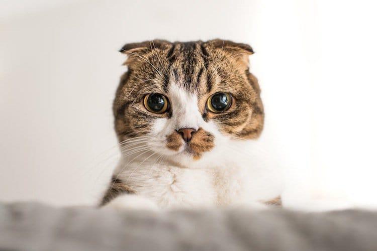 cat-condescending