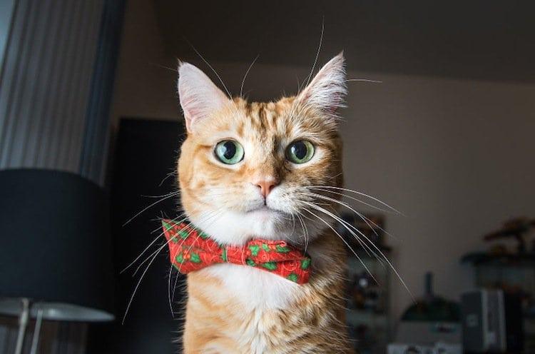 cat-confident