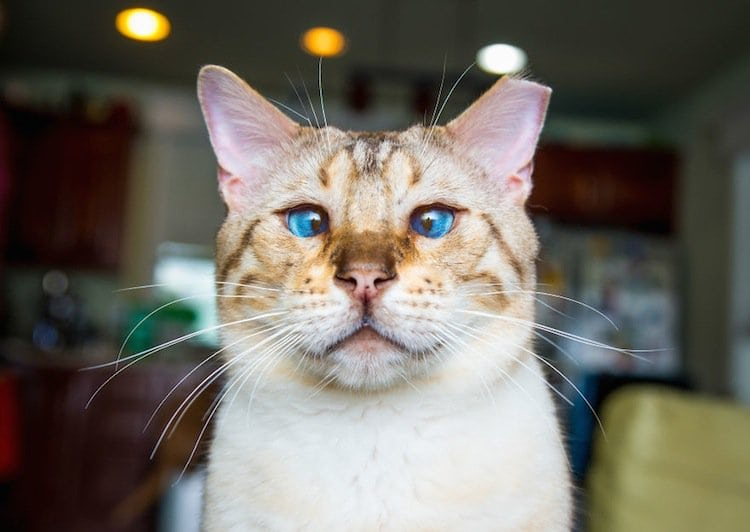 cat-confused