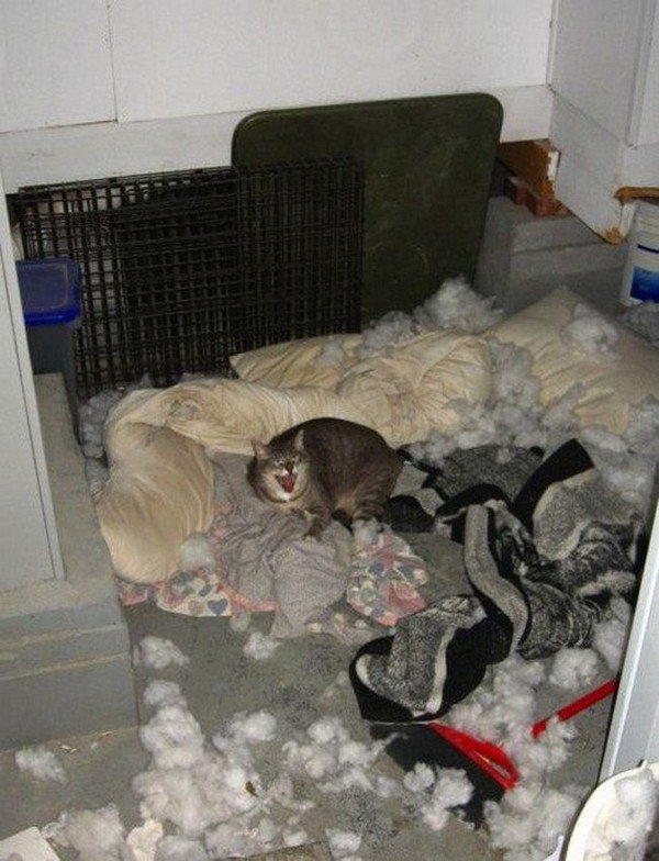cat makes mess