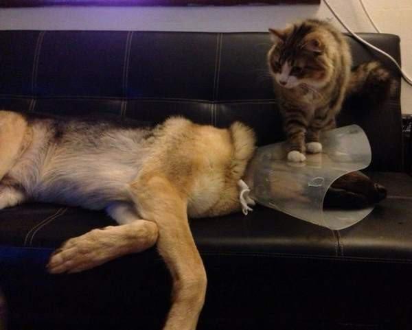 cat standing dog injured head