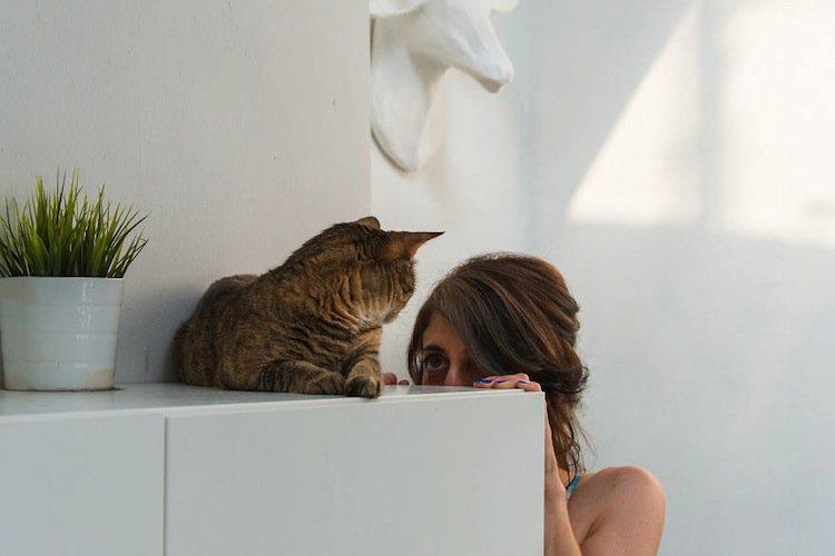 cats-i
