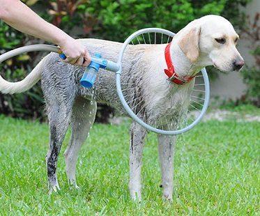 360 Degree Dog Washer