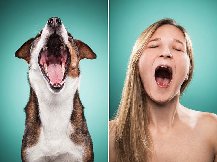 how to make a dog yawn