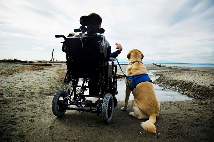 dogs-wheelchair