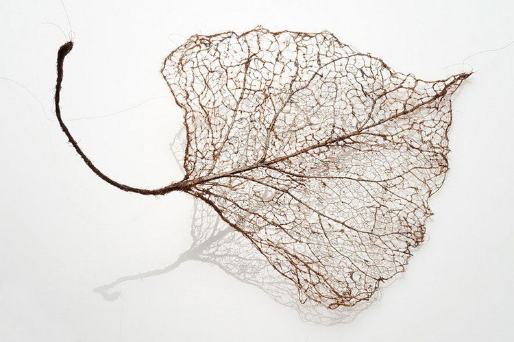 human hair leaf and stalk
