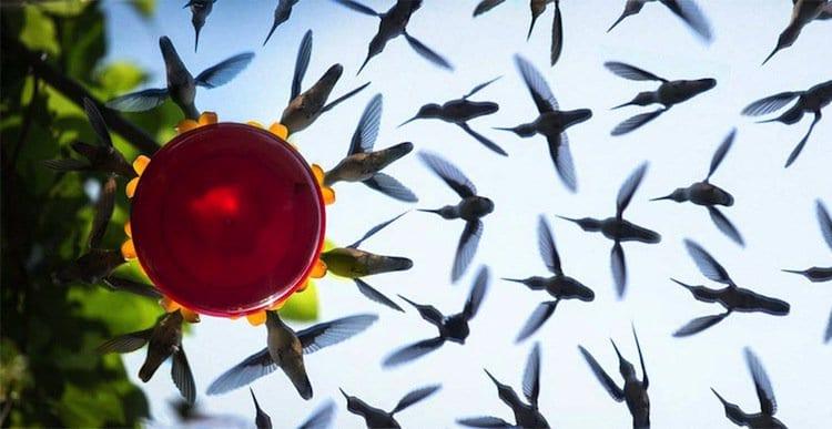 hummingbird-s