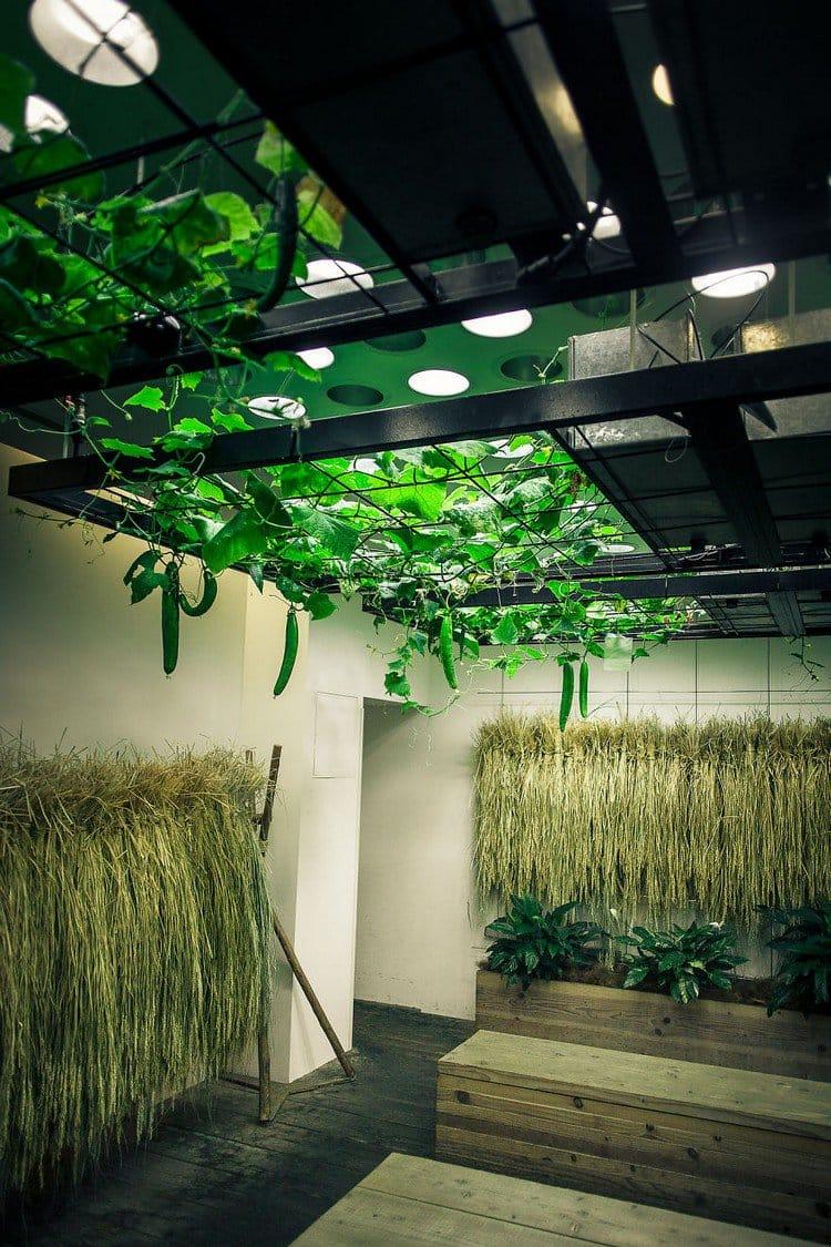 indoor plants growing