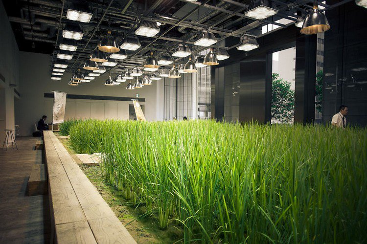 indoor rice paddy lights