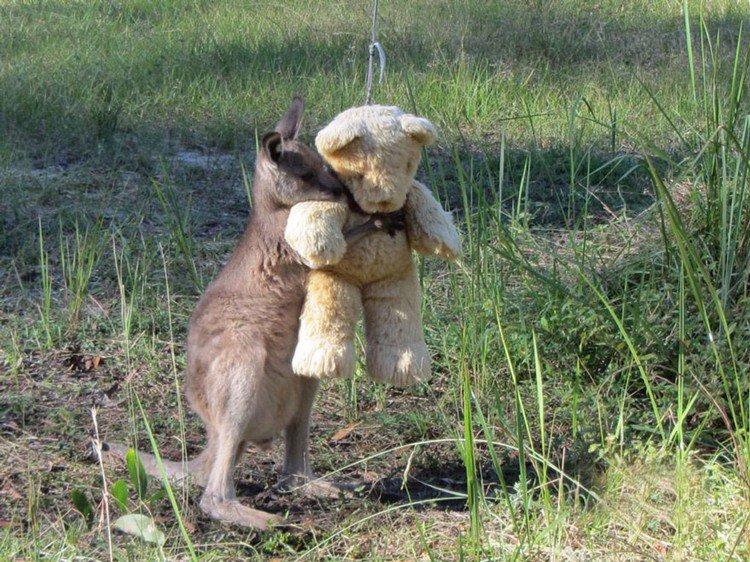 kangaroo hugging teddy bear