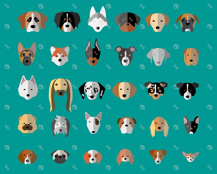 laura-palumbo-dog-breeds