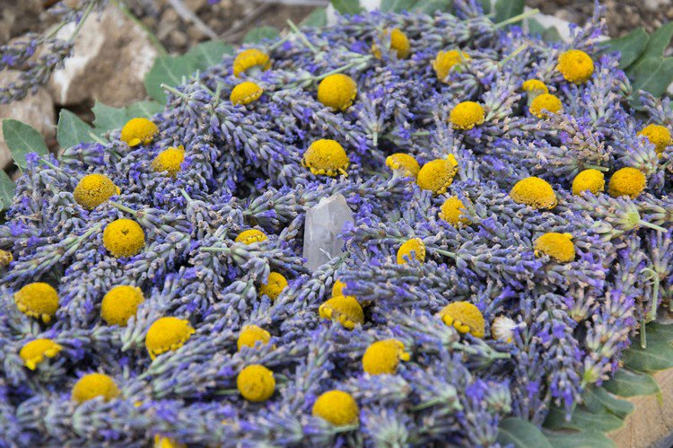 lavender art close up