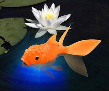 light-up fish