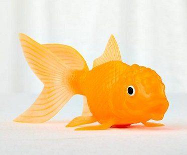light-up fish koi toy