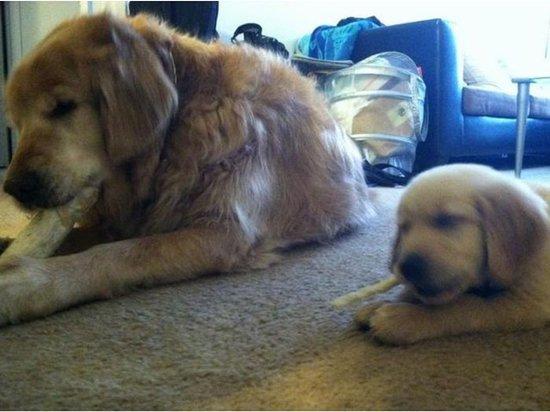 like-father-like-son-chew