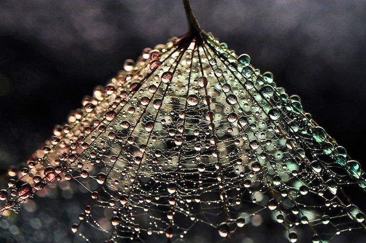 macro-droplets