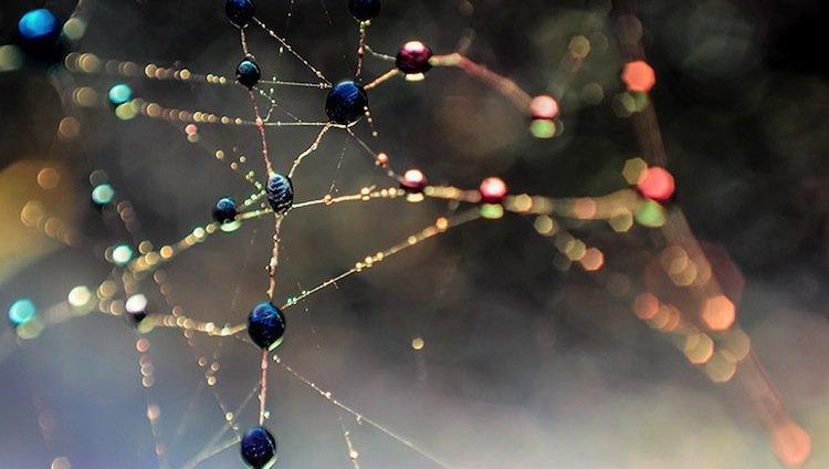 macro-webs