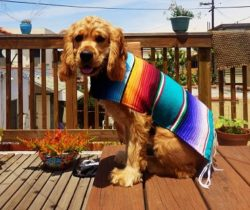 mexican dog poncho