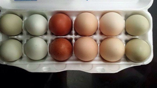 perfectly paired colored eggs