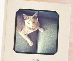 pet selfies photo album
