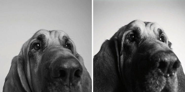 pup-copper