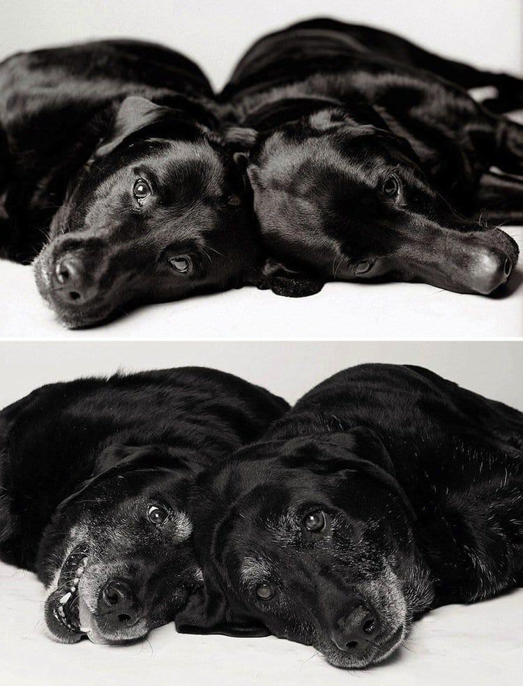 pup-maddie