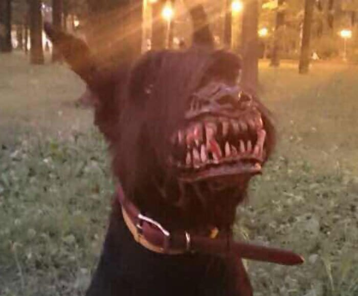scary dog muzzle close up