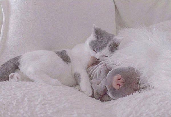shar-cuddle
