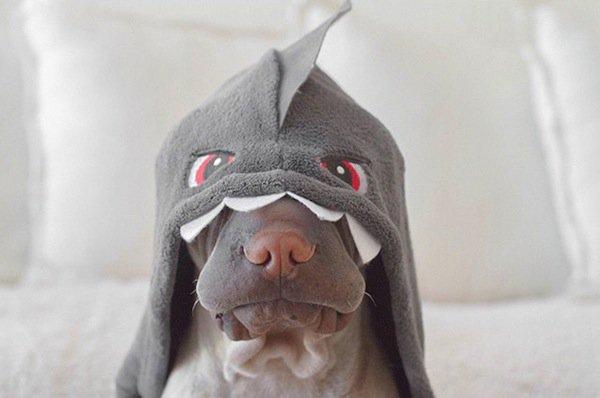 shar-shark