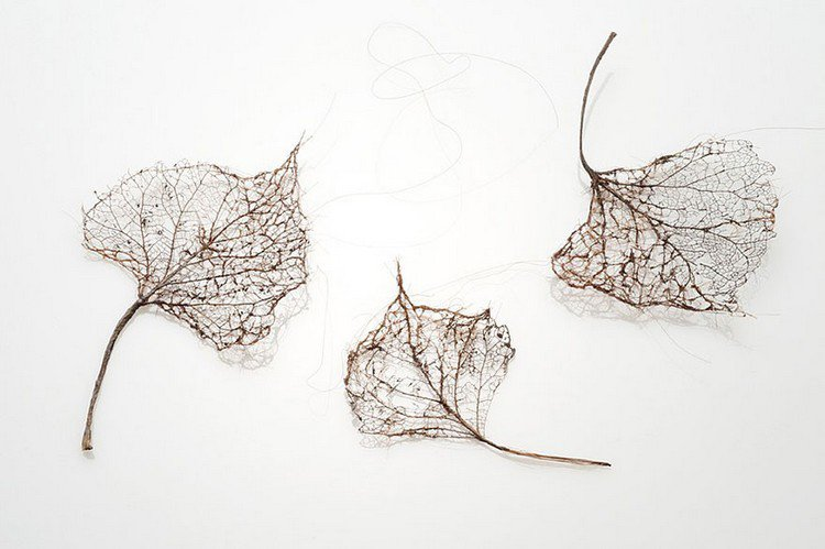 trio human hair leaves