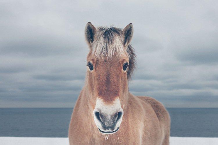 troy-gallop