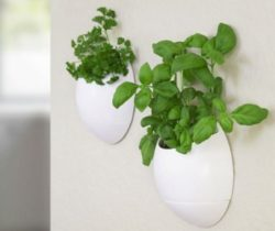 wall-mounted herb planter