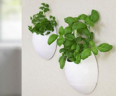 Wall Mounted Herb Planter