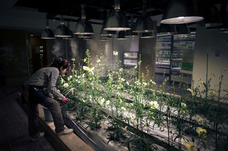 woman gardening pasona building
