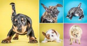 Carli Davidson Shake Puppies