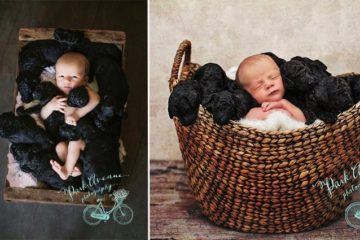 Dog And Owner Give Birth On Same Day