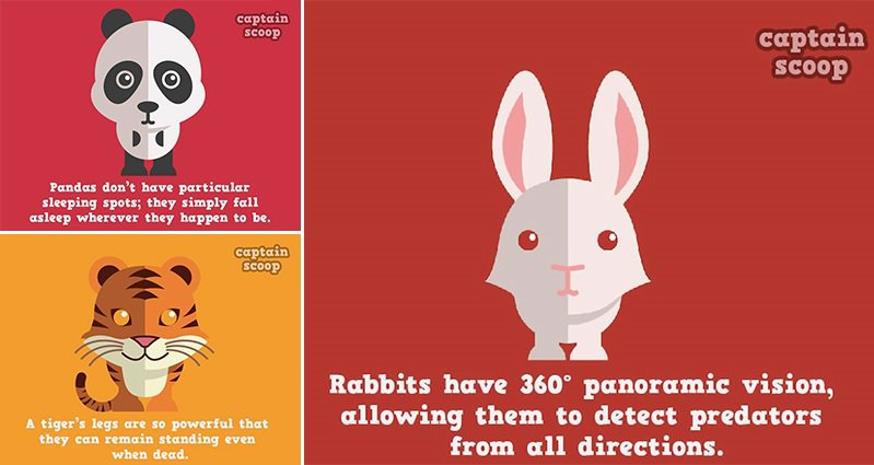 15 Random And Interesting Facts About Animals