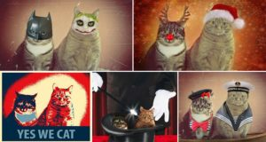 Joasia Studzinska Photoshopped Cats