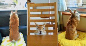 Koron The Tokyo Bunny