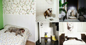 Photographs Of Dogs As If They Were Homeowners