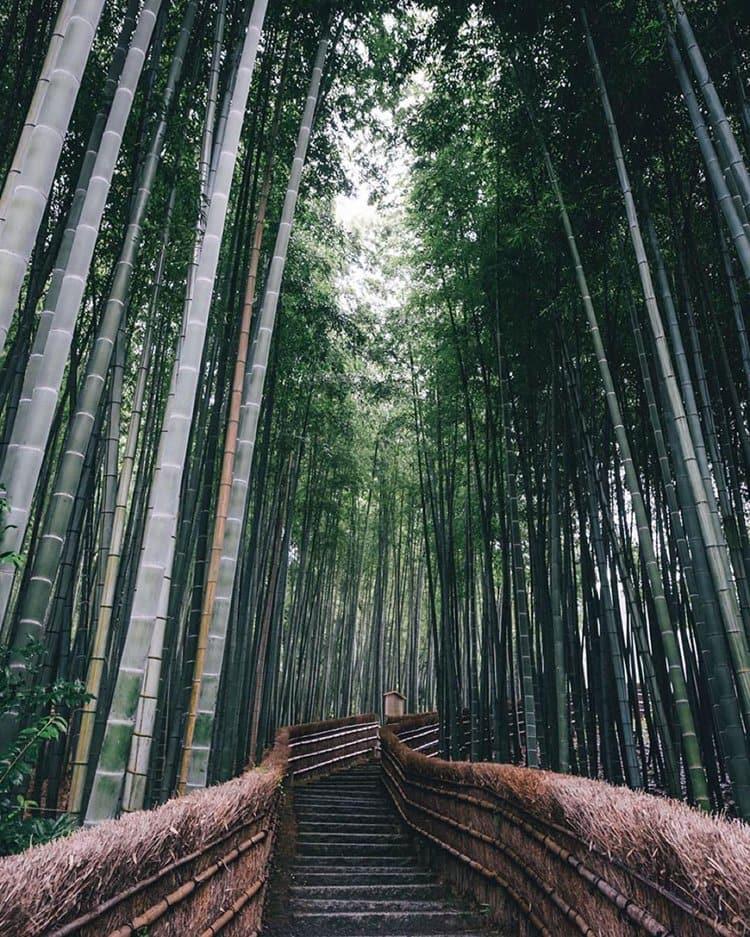 Takashi Yasui bamboo