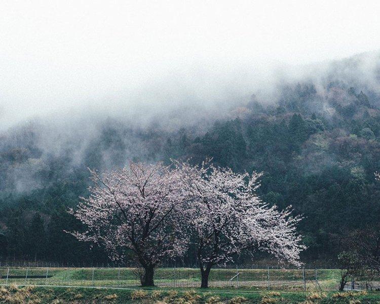 Takashi Yasui blossom