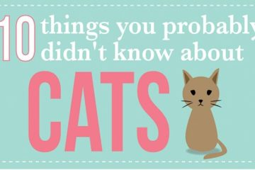 Things You Dont Know About Cats