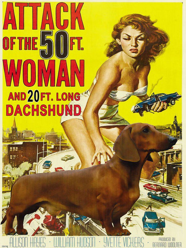 attack of the dachshund