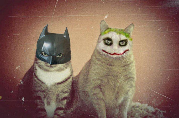 batman joker cats