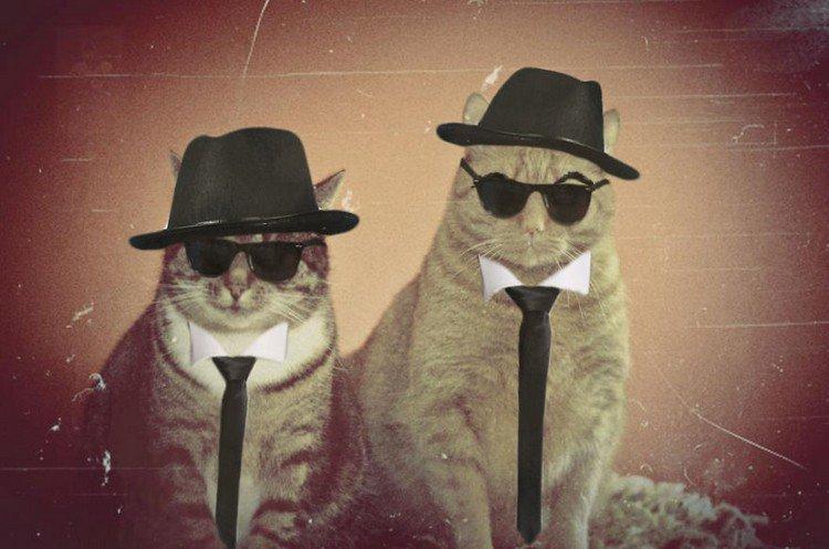 blues bros cats