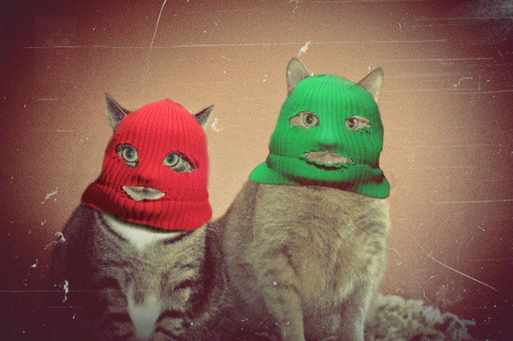 burglar cats