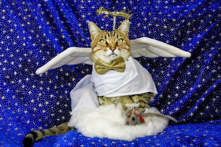 cat-angle